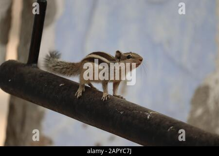 Squirrel in the autumn on the iron rod, park. - Stock Photo