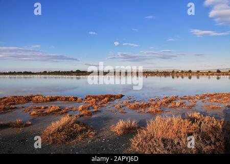 Flamingo on salt lake in Larnaca, Cyprus - Stock Photo