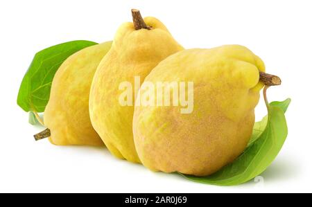 Isolated quinces. Three quince fruits in a row on white background with clipping path - Stock Photo