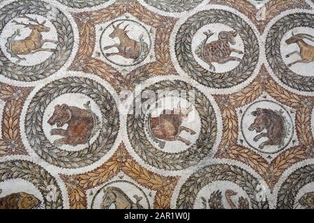 An ancient Roman mosaic from the 4th century AD found in Thuburbo Majus, showing animals and displayed at the Bardo National Museum in Tunis, Tunisia. - Stock Photo
