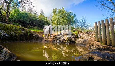 FATIMA, PORTUGAL - Mar 18, 2018: Bear near the lake in Pia do Urso on a sunny day - Stock Photo