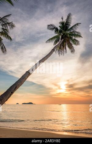 Palm tree on an empty tropical beach at sunset