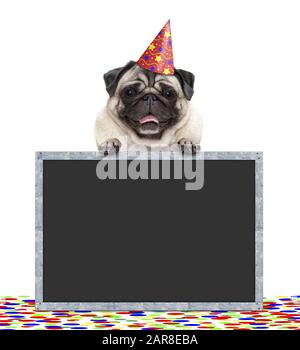 frolic smiling birthday party pug dog with hat and confetti and paws on blackboard sign, isolated on white background - Stock Photo