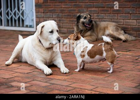 Variety of dogs in one shot, Westville, South Africa