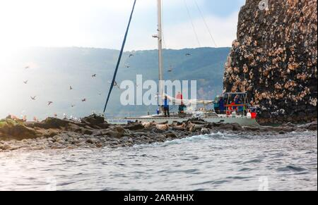Kamchatka, Russia - July 20., 2019: Tourists on a boat trip on a yacht near the island watching the sea lions. - Stock Photo
