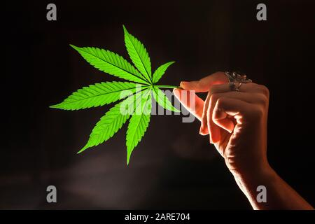 Closeup shot of a single marijuana leave lit from behind, held horizontally by a ring covered woman's hand. Backlit cannabis leaf on dark background. - Stock Photo