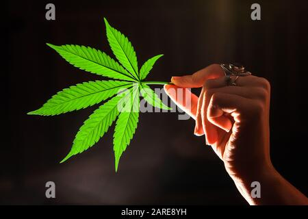 Closeup shot of a single marijuana leaf lit from behind. Pot leaf held horizontally between the thumb and forefinger of ring covered woman's hand. - Stock Photo