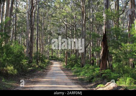 South West forest, Margaret River, Australia - Stock Photo