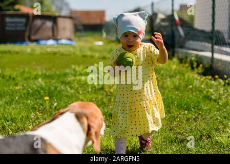 Little girl child playing in sunny day in backyard with her best friend beagle dog.