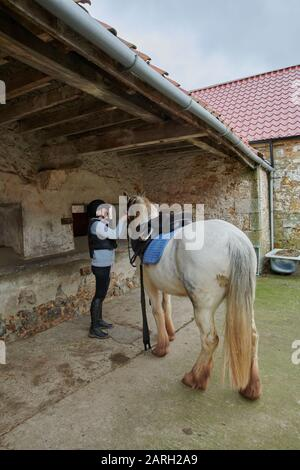 A young woman tacking up her horse in a stable yard ready for riding out. Scotland, UK, GB. - Stock Photo
