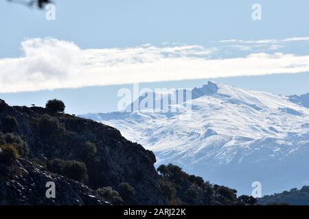 Sierra Nevada with snow view from the natural park of the Sierra de Huétor in Granada with hills of pine forests in front and an intense blue sky with - Stock Photo
