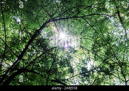 The sun's rays through the branches and green leaves of the tree - Stock Photo