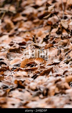 foliage in winter background, shallow depth of field - Stock Photo
