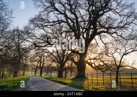Bare winter trees in the afternoon sunlight near Stanway, Cotswolds, Gloucestershire, England - Stock Photo