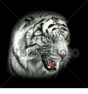 Tiger Black&White - Stock Photo
