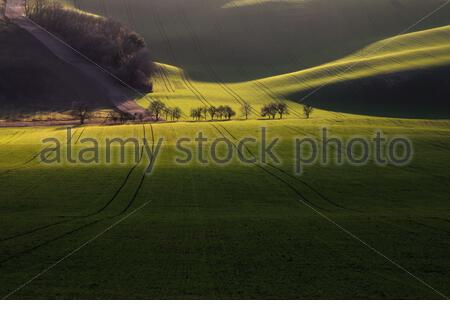 Trees along a path through a rolling spring field with traces of tractor wheels in evening sun - Stock Photo
