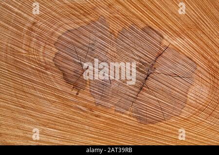 Natural abstract texture in the core of a tree trunk - Stock Photo