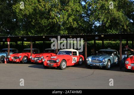 Austin Healey vintage sports cars at Shelsley Walsh speed hillclimb, Worcestershire, UK. - Stock Photo