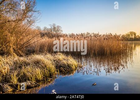 A cold, winter sunrise over Coate Water in Swindon. - Stock Photo