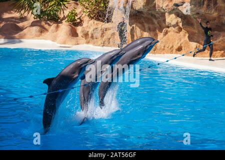 dolphin show at Loro Parque or Loro Park is a zoo on the outskirts of Puerto de la Cruz on Tenerife