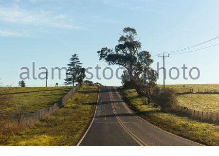 Scenic landscape with empty rural asphalt road running through green field with trees in sunny day with blue sky - Stock Photo