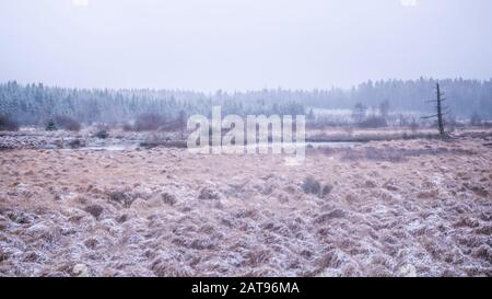 High Fens landscape with dead tree near little lake. The trees and grasses on this hazy winter morning touched by a tiny layer of snow. Photo made in - Stock Photo