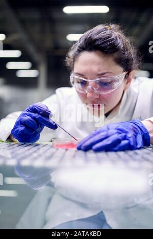 Young brunette woman laboratory assistant with petri dish in hands on blurred background - Stock Photo
