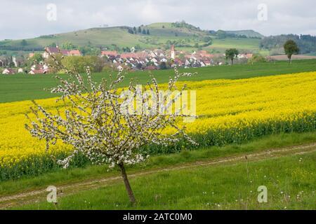 Blühender Apfelbaum • Baden-Württemberg, Deutschland - Stock Photo