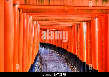 Red painted wooden Torii gates in Inari Taisha Buddhist temple of Kyoto city, Japan. Walkway through the corridor of endless gates. - Stock Photo
