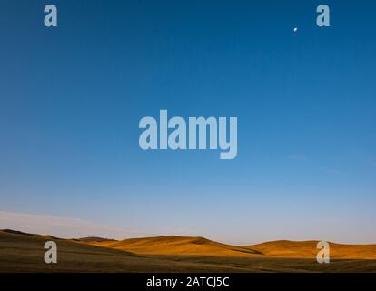 Steppe grassland landscape with moon in sky at sunrise, Hustai or Khustain Nuruu National Park nature reserve, Tov Province, Mongolia, Asia - Stock Photo