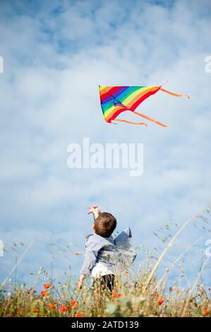 active little caucasian child in shirt holding multicolored flying kite in air standing among flower field in summer sunset