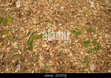 Close up of grass and moss  growing on forest floor on a bed of dead leaves - Stock Photo