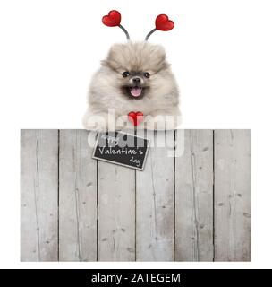 cute smiling pomeranian spitz pug puppy dog with red hearts and sign happy valentine's day, hanging with paws on wooden fence, isolated on white backg - Stock Photo