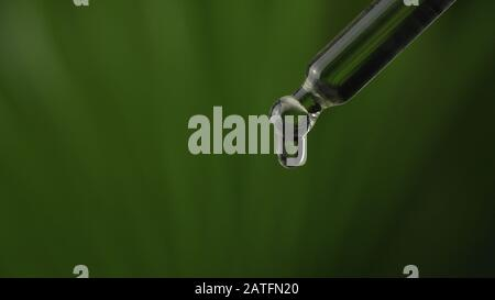Super macro close up of droplet pipette dosing biological and ecological oil of the hemp plant.  Pharmaceutical herbal cbd oil, organic pharma concept - Stock Photo