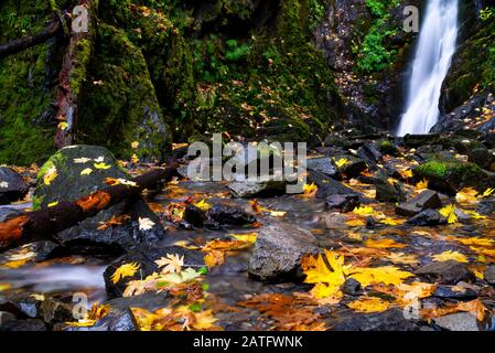 Goldstream Provincial Park, BC Parks in the fall with leafs in a stream of water - Stock Photo