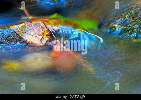 Leaves on a Rock in a Stream abstract in nature. - Stock Photo