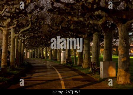 Tree alley in Düsseldorf winter night