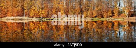 Panorama, Autumn at the Lake Schweingartensee, Colourful forest is reflected, Mueritz National Park, Mecklenburg-Western Pomerania, Germany - Stock Photo