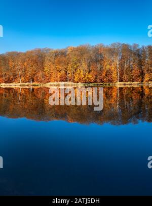 Autumn at Lake Schweingartensee, Colourful forest reflects, Mueritz National Park, Mecklenburg-Western Pomerania, Germany - Stock Photo