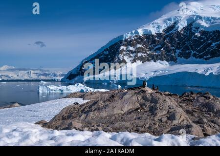 Gentoo penguin rookeries on top of dry rocky terrain  in beautiful Neko Harbor, an inlet of the Antarctic Peninsula - Stock Photo