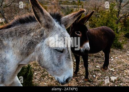 Two sad donkeys standing in the wild in a natural park - Stock Photo
