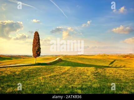 Tuscany countryside landscape, cypress tree and white road. Siena, Italy, Europe. - Stock Photo