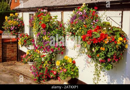 Collection of large hanging baskets of mixed flowers on side of white walled cottage with flowers in tubs beneath them. - Stock Photo