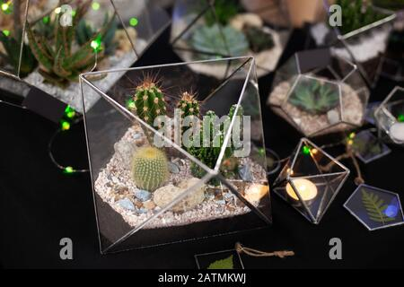 Florarium composition of cactus and succulents, stone and sand, element of interior, home decor, glass terrarium. Small garden with Home indoor plant - Stock Photo