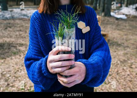 A young girl in a blue sweater holds a cedar seedling in her hands. Pine family plant for planting in the ground. The concept of restoration and prote - Stock Photo
