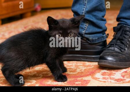 Kitten and legs in black boots close up - Stock Photo