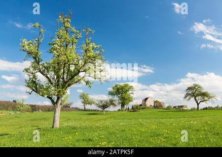 Spring on the Bodanrueck with Freudental Castle, Allensbach, Baden-Wuerttemberg, Germany - Stock Photo