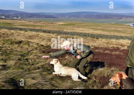 Gun dogs training session Barden Moor Yorkshire Dales UK - Stock Photo