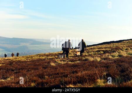 Gun dogs training session Barden Moor Yorkshire Dales UK - Stock Photo