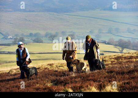 Gun dogs training session Barden Moor Yorkshire Dales UK three woman walk across the moor with their dogs - Stock Photo